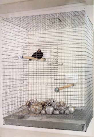 Michele Chiossi Natura Morta!, 1997 fusione in alluminio, gabbia, merlo indiano ammaestrato dimensioni variabili scultura patina composizione orientalismo
